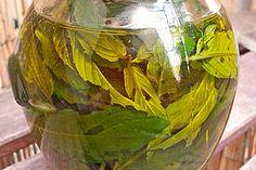 Minzöl, ein tolles Rezept aus der Kategorie Haltbarmachen. Bewertungen: 2. Durchschnitt: Ø 3,5.