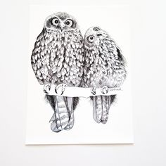 Get a piece of Tumbleweed art for your wall. Our Morepork/Ruru design is printed on Archival-Matte paper - it has the feel and the weight of the original ink drawing. Fairytale Art, Cute Owl, Line Drawing, Line Art, Illustration Art, Illustrations, How To Draw Hands, Lion Sculpture, Creatures