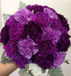 Purple carnations, white discover thousands of images about purple carnation bouquet , a visual bookmarking tool that helps you dis. Purple Carnation Bouquet, Purple Carnations, Purple Wedding Bouquets, Bridal Bouquets, Carnation Colors, Bridesmaid Bouquets, Flower Bouquets, Bouquet Wedding, Country Wedding Flowers