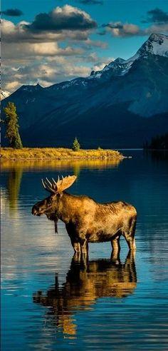 Warming after bath at Moraine Lake in Banff National Park, Alberta, Canada • photo: Edward Marcinek.