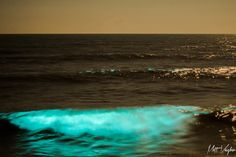 What Is Causing The Blue Glowing Waves At Night In The Outer Banks