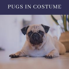 Essential Oils For Cough, Oil For Cough, Pugs In Costume, Pug Tattoo, Tattoos, Fawn Pug, Oils For Dogs, Dog Illustration, Illustrations