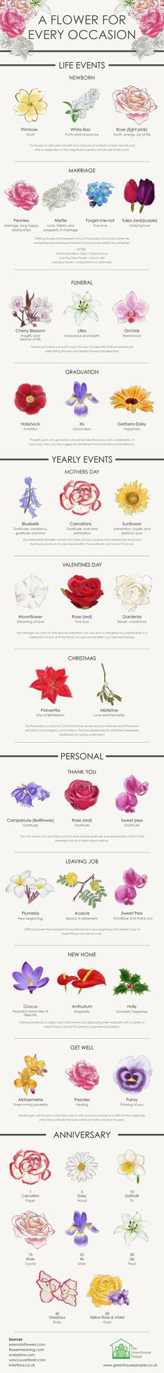 Flower meanings - How To Choose The Perfect Flower For Your Occasion Infographic Types Of Flowers, Beautiful Flowers, Flowers For Love, Beautiful Gifts, Draw Flowers, Paint Flowers, Flower Tattoo Meanings, Tattoo Flowers, Orchid Tattoo Meaning