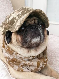 They told me that I was camouflaged, but I don't know what that means...
