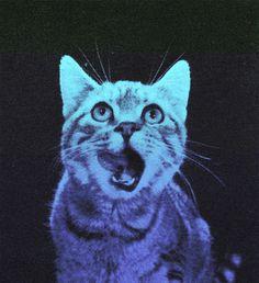 http://25.media.tumblr.com/tumblr_m64scdtKVU1qg93gco1_500.gif