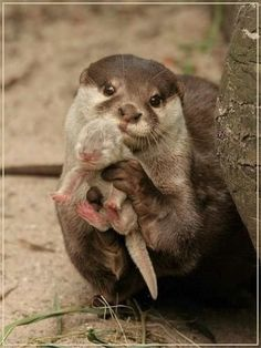Mama otter holding her baby. Awww.