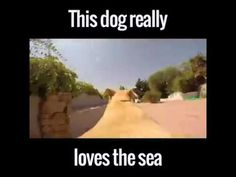 This dog has the best life via Newsflare / Credit: - YouTube