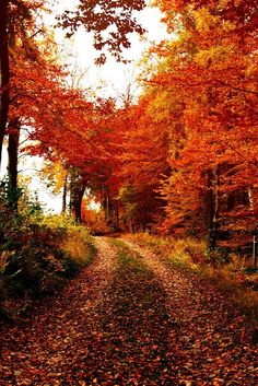 Autumn Road Belle Image Nature, Beautiful Places, Beautiful Pictures, Simply Beautiful, Autumn Scenes, Seasons Of The Year, All Nature, Fall Pictures, Belle Photo