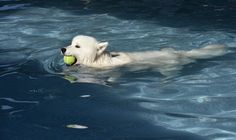 The swimming pool for dogs - in pictures | Life and style | The ...