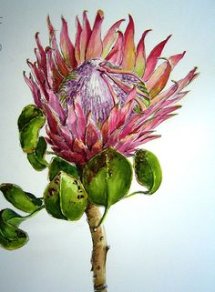 south african watercolour artists - Google Search Protea Art, Protea Flower, Watercolor Artists, Watercolor Flowers, Watercolour Art, Art Floral, Sibylla Merian, Australian Flowers, South African Artists