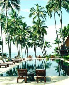 pool and palms #paradise #island #pool #beach