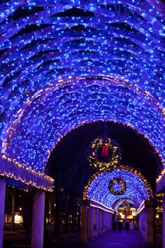 Blue Trellis::Boston at Christmas. I've seen this beauty first hand - it's at Christopher Columbus park. Christmas In America, Blue Christmas, Beautiful Christmas, Winter Christmas, All Things Christmas, Christmas Holidays, Christmas Markets, Father Christmas, Christmas Light Displays