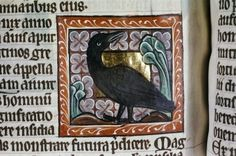 Bestiary. - Medieval and Renaissance Manuscripts. Crow, Bodley 764