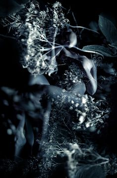 Self Portrait with Lace - Kirsty Mitchell Photography Dream Photography, Photography Projects, Macro Photography, White Photography, Fantasy Photography, Merida, Kirsty Mitchell, Dark Fairytale, Fantasy Places