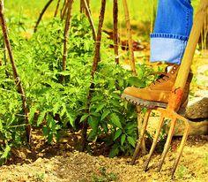 Gardening Tips Every Gardener Should Know