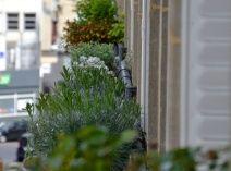 Une application web pratique et ludique pour créer et commander ses plantations de terrasse  http://www.balconfacile.com