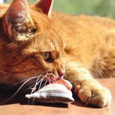 Katzenspielzeug Baldriankissen Baldini günstig bei zooplus