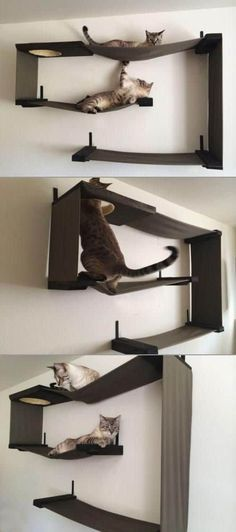 Diy Cat Toys, Dog Toys, Diy Jouet Pour Chat, Cat Heaven, Cat Towers, Cat Playground, Playground Ideas, Playground Design, Ideal Toys