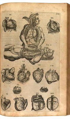 Heart Illustration, Medical Illustration, Rabbit Anatomy, Anatomy Art, Animal Anatomy, Human Anatomy, Stippling Art, Arte Obscura, Vintage Medical