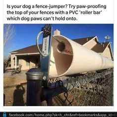 Dog proof fence …