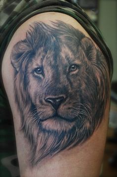 Shane ONeill - black and gray lion portrait
