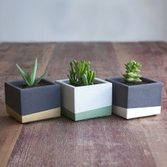 Set of Three Small Color Block Concrete Planters — Nystrom Goods