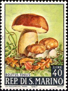 1967 - Funghi -  Boletus edulis