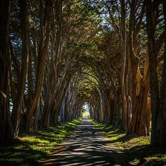"""""""Keep your face always toward the sunshine - and shadows will fall behind you. - Walt Whitman  It's been a tree filled few days. This cool tree lined road…"""""""