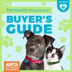 Your pet is like a family member to you. Be it a cat, a dog, or any other pet, you make sure that it gets the best care in the world and you do everything you can to keep it safe and healthy. One of the things that you should do first is to get pet. Embrace Pet Insurance, Pet Health Insurance, Insurance Quotes, Kitten Care, Healthy Pets, Find Pets, Four Legged, Dog Care