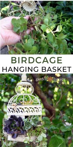 How to make a vintage birdcage succulent planter that is drought tolerant. Full instructions and care tips for successful container gardening. #gardentherapy #birdcage #container #hangingplanter #succulents Hanging Basket Garden, Hanging Planters, Hanging Baskets, Vintage Birdcage, Drought Tolerant, Bird Cage, Garden Projects, Container Gardening, Succulents