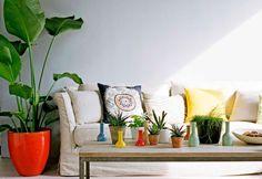 Zimmerpflanze schattig zimmerpflanzen wenig licht