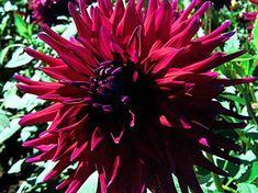 Ferncliff Gardens - View Flower revrend