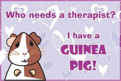 Who needs therapy? I have a guinea pig!