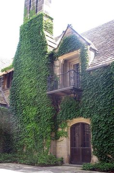 One day I will have a house covered in Ivy, and I will be so pleased! :)