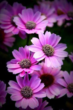 Winter Blooms | Life close up - a photo blog
