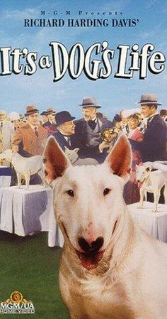 Directed by Herman Hoffman. With Jeff Richards, Jarma Lewis, Edmund Gwenn, Dean Jagger. A bull terrier tells his life story, from the streets of the Bowery to a life of luxury. Bull Terrier Funny, British Bull Terrier, English Bull Terriers, Best Dog Breeds, Best Dogs, Dog Trailer, Dog Suit, Mans Best Friend, Dog Life