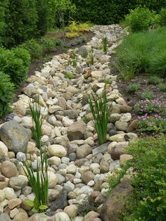 backyard berms and swales - Google Search