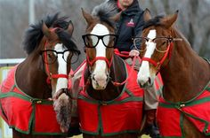 budweiser clydesdales super bowl | Budweiser Clydesdales are Getting the Boot | Horse Collaborative
