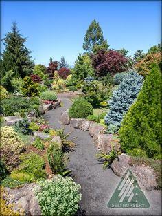 The Amazing World of Conifers Garden Maintenance, Garden Paths, Stairways, Evergreen, Stepping Stones, Landscape, World, Amazing, Outdoor Decor
