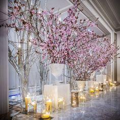 La dulzura y romanticismo de los cerezos