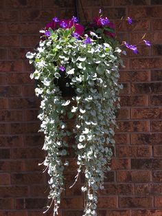 Silvery hanging pots