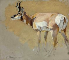 Carl Rungius   Pronghorn Antelope