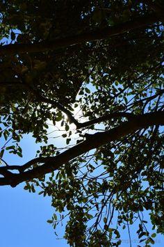 Olhares.com Fotografia | �Pedro