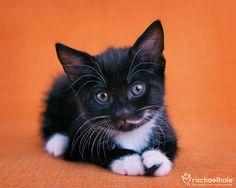 Halloween/black and white/kitten/orange