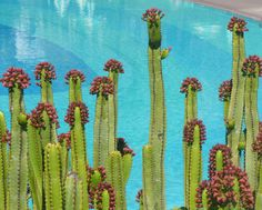 Flora autoctona Canaria. isla de La Palma¡