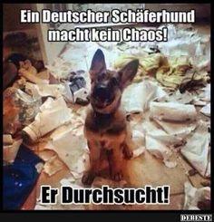 Ein Deutscher Schäferhund macht kein Chaos! | DEBESTE.de, Lustige Bilder, Sprüche, Witze und Videos