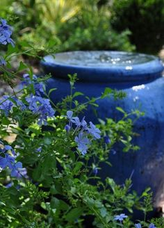 Cooling color echo: blue plumbago and a bubbling blue fountain Blue Garden, Colorful Garden, Blue Plumbago, Prayer Garden, Water Features In The Garden, Mediterranean Garden, Garden Fountains, Small Backyard Landscaping, Parcs