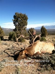 Bow Hunting Elk: Hunt the Rut and You Will Encounter Wapiti! Good.