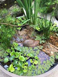 Fantastic diy garden information are readily available on our web pages. Check i… Fantastic diy garden information are readily available on our web pages. Check it out and you wont be sorry you did. Small Water Gardens, Container Water Gardens, Indoor Water Garden, Indoor Water Fountains, Container Pond, Outdoor Fountains, Garden Pond Design, Bog Garden, Patio Pond
