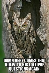 owl memes - Yahoo Image Search Results